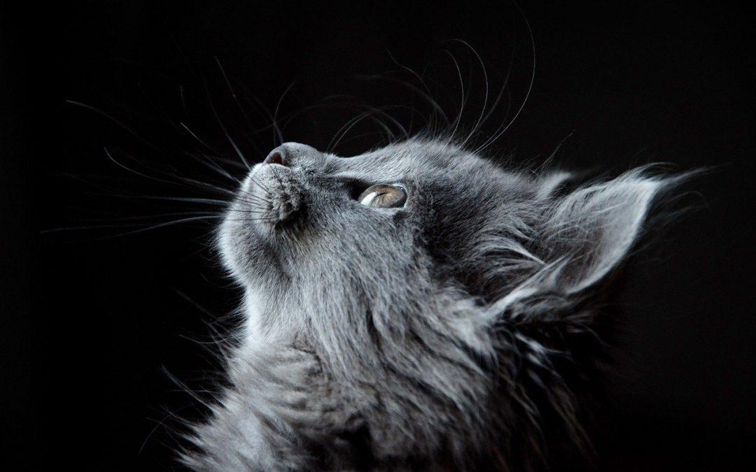 Comment déménager dans un nouveau foyer avec un chat?